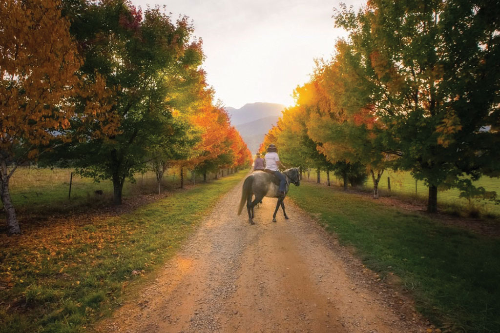 Multi-day Bright in Autumn tour horse ride